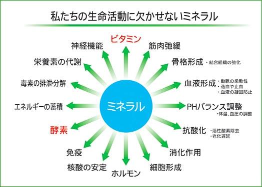 知っておきたいミネラルの話 | 広島のスポーツショップ コダマ