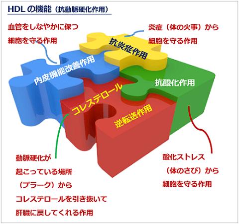 HDLの役割