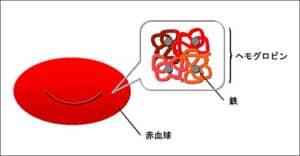 ヘモグロビンと鉄