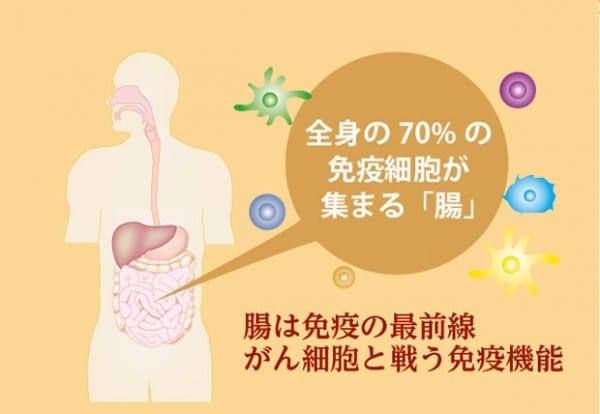 腸と免疫細胞