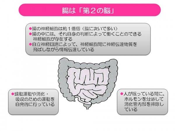 腸は第2の脳
